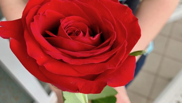 Rose from the Grand Floridian's exclusive Victoria and Albert Restaurant