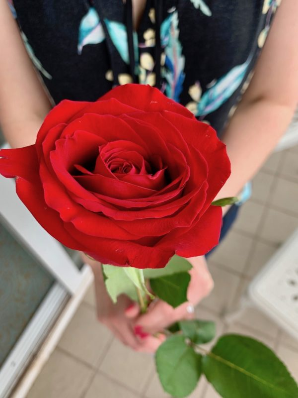 A red rose for the lady