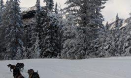 Kingmik Dog Sled Tour Through a Winter Wonderland